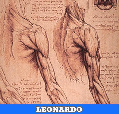 Leonardo, disegni studi anatomici
